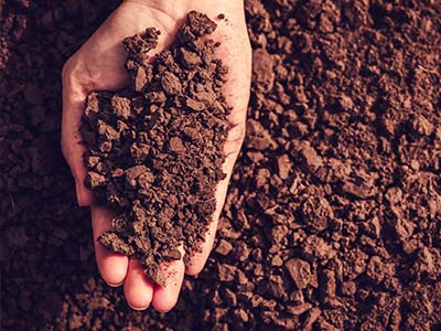 soil-of-medinipur